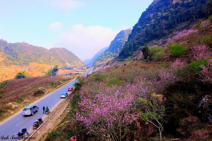 Lễ hội Hoa đào huyện Vân Hồ năm 2018